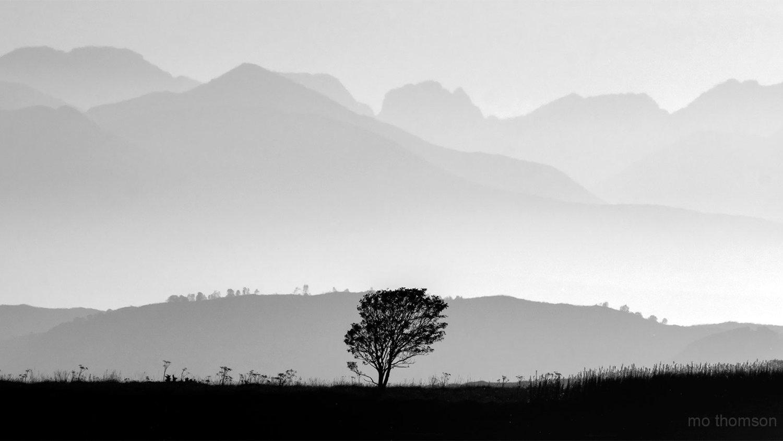 solo_tree_cuillins.jpg